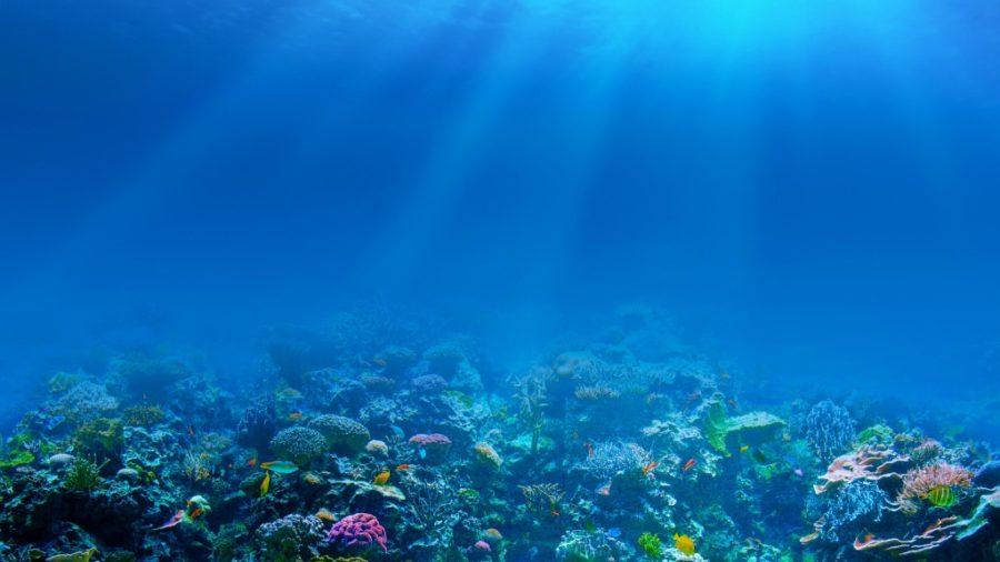 Atlantis Sea Colony